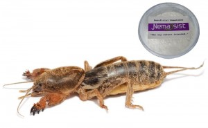 Nemassist Mole Cricket Treatment