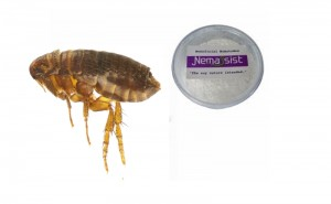 Nemassist Flea Treatment